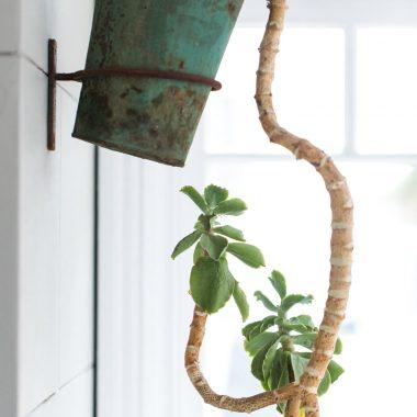 An interesting pot plant